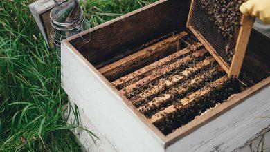 تصویر خرید بهترین عسل طبیعی از بهترین برندها