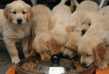 راهنمای خرید غذای سگ ایرانی و خارجی ارزان برای تمامی نژادها