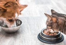 Photo of خرید ظرف غذای سگ و گربه در 7 مدل دوقلو و تکی