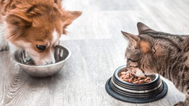 تصویر خرید ظرف غذای سگ و گربه در 7 مدل دوقلو و تکی