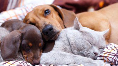 تصویر 7 مدل جای خواب سگ و گربه برای حیوان خانگی شما